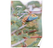 Blue Headed Lizard - Peeking Out Poster