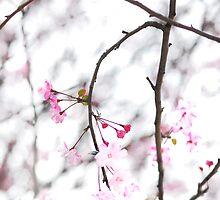 Sakura 2 by danise tang