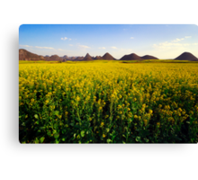 Canola fields in Luo Ping Canvas Print