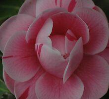In the Pink by bjsmithpratt