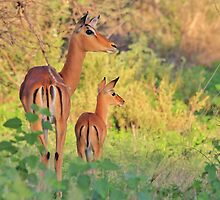 Impala - African Wildlife - Adorable New Life by LivingWild
