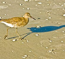 Me And My Shadow by Jan Cartwright