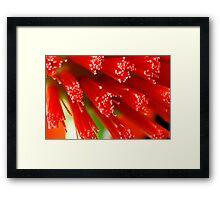 Red Raw Framed Print