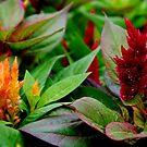 Garden Beauties by Sandra Moore