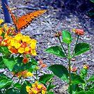 Wings Of Orange by Sandra Moore