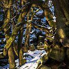 Padley Gorge Winter by John Dunbar