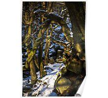 Padley Gorge Winter Poster