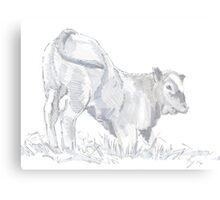 Calf Drawing Canvas Print
