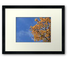 Colorful maple leaves in autumn Framed Print