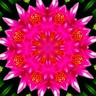 Pink Water Lilly Abstract by Sandra Moore