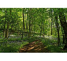 Bee Wood, Bluebells Photographic Print