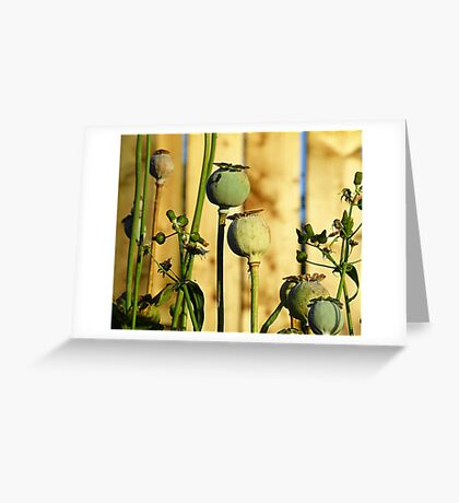 Poppy Heads Greeting Card