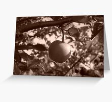 Solitary Apple Greeting Card