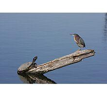 Wilderness Conversation Photographic Print