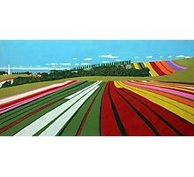Tulip Farm, Table Cape Photographic Print
