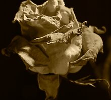 Sepia Rose by Duane Fulk