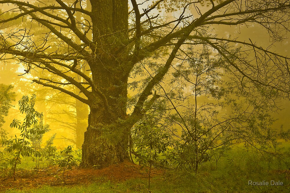 Mystical Forest #1 by Rosalie Dale