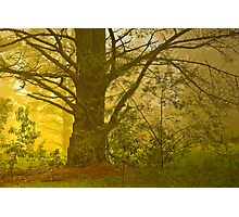 Mystical Forest #1 Photographic Print