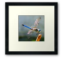 Oh Dragonfly Framed Print