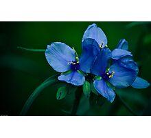 Blue Aura Photographic Print