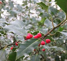 Winter Holly Berries by LynseyMacKenzie
