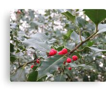 Winter Holly Berries Canvas Print