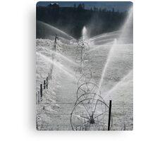 Frosty Sprinklers  Canvas Print
