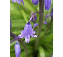 Purple Spring Photographic Print