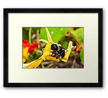 Gimme Some Pollen Framed Print