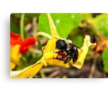 Gimme Some Pollen Canvas Print