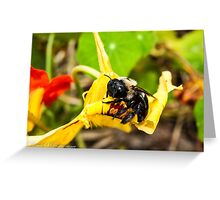 Gimme Some Pollen Greeting Card