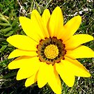 Yellow flower by Shulie1