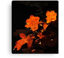 Oak tree leaves in fall colors with dark background. Canvas Print