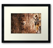 An Insect Eaten Tree Trunk Without Bark Framed Print