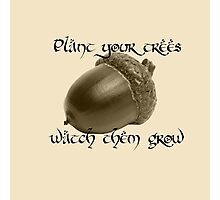 Plant Your Trees Photographic Print