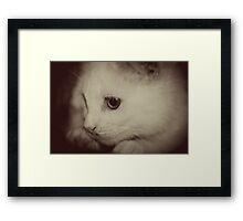 Rescued Framed Print