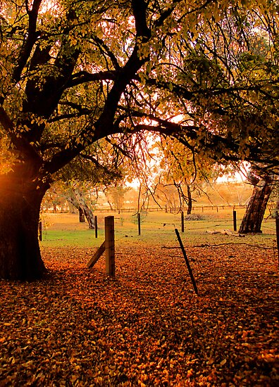 Autumn Day by Julie Thomas