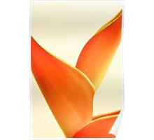Orange Heliconia on white background Poster