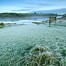 Frosted grass by DualAspect
