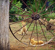 Guarding the Gate to where the Cats and Kittens live by Clare Colins