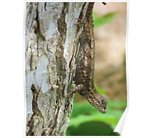 Lizard on a tree Poster