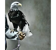 Proud Eagle Photographic Print