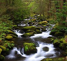 Smoky Mountain Stream, GSMNP by ThomasRBiggs