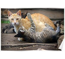 Playtime - Cats and Kittens Poster