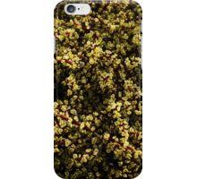 Rainbow Bush succulent botanical photography iPhone Case/Skin