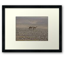 Camels in Jordan 2 Framed Print