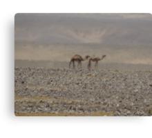 Camels in Jordan 2 Canvas Print