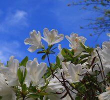 Spring Day by Bradley Miller