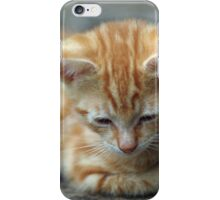 Watching Ants - A Kitten's life iPhone Case/Skin