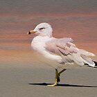 Gull On The Beach by Kathy Baccari